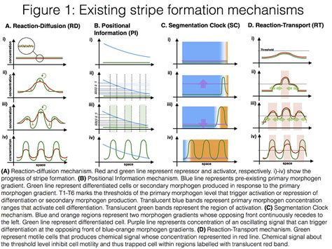 pattern formation exles stripe formation patterns openwetware