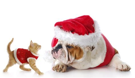 upcoming sales have you bought your pet a gift