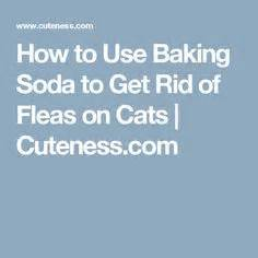 how to get rid of fleas on bed how to use baking soda to get rid of fleas on cats cats