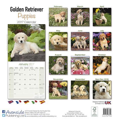 golden retriever calendar 2017 golden retriever puppies calendar 2017 pet prints inc
