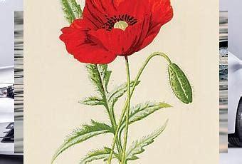 significato dei fiori papavero il linguaggio dei fiori il papavero paperblog