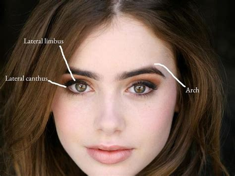 collins eye color 25 best ideas about collins eyebrows on