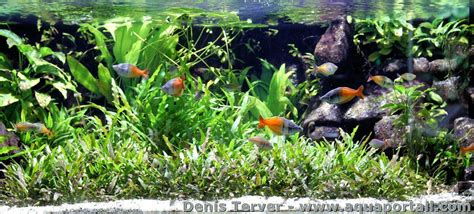 Aquascaping l aquarium d 233 finition et explications