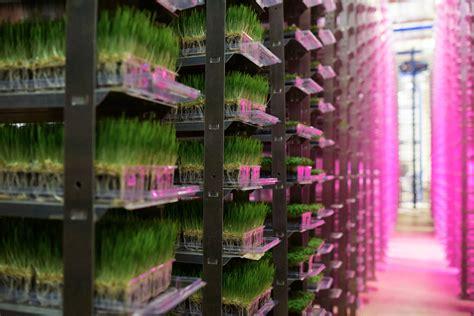 dubai    commercial vertical farm