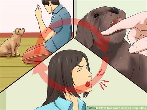 puppy won t stop biting 4 ways to get your puppy to stop biting wikihow