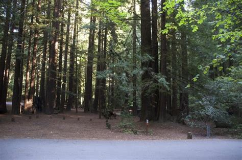 Cabins In Humboldt Redwoods State Park by Drive Thru A 3000 Year Redwood Picture Of Humboldt