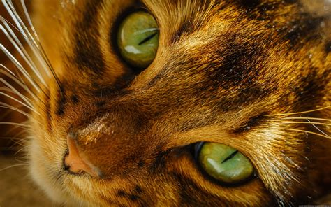 4k wallpaper open your eyes cat eyes images hd desktop wallpapers 4k hd