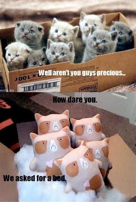 Bear Stuff Meme - grumpy cat stuffed animal meme by claire ernstsen www