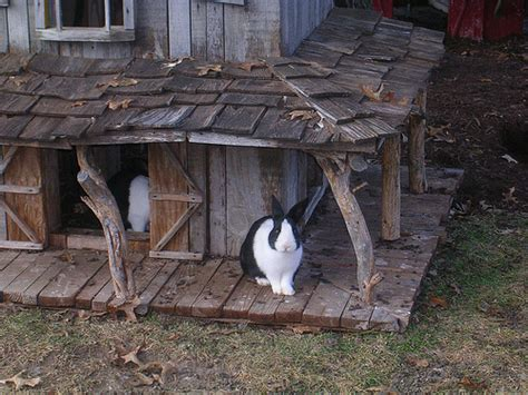 rabbit house bunny digs