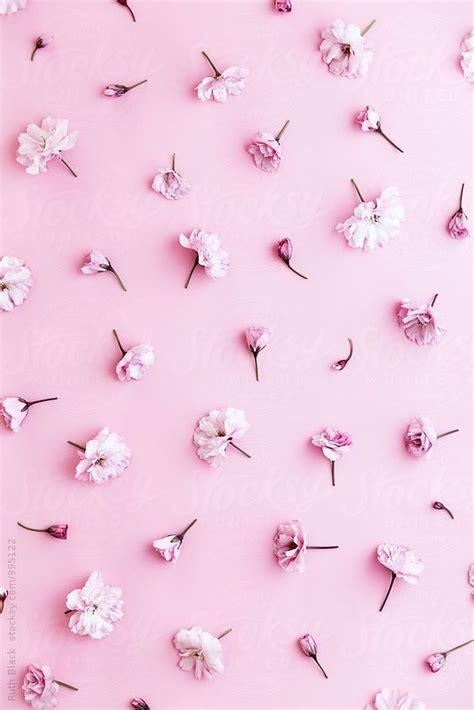 Pink Wallpaper On Pinterest | ruth black for stocksy united pembo pinterest