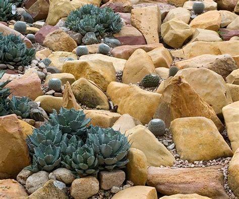 piante grasse in giardino giardino roccioso come progettare al meglio un rock