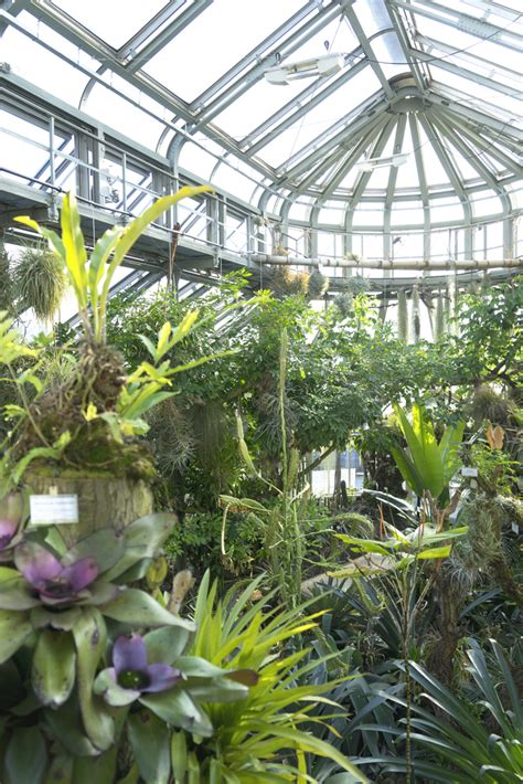 berlin botanical garden berlin botanical garden five botanical garden in the