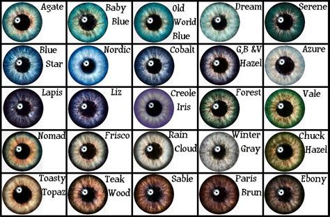 rarity of eye color eye color chart from search writing