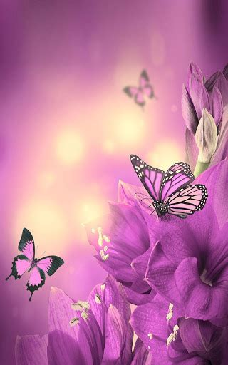 Live Butterfly Wallpaper For Windows 7 by Butterfly Live Wallpaper Play Softwares