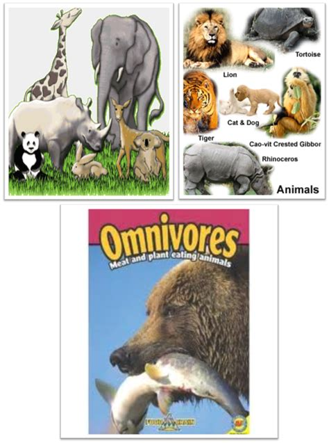 animals eat  food