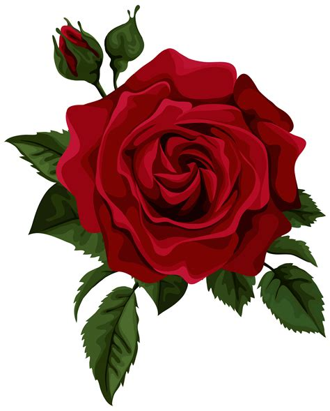 roses red rose with bud transparent clip art picture