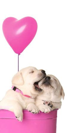 cute puppy dog pet iphone 6 plus wallpaper iphone 6 cute pink puppies wallpaper www pixshark com images
