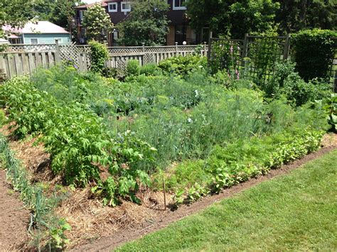 Beautiful Vegetable Garden Meanwhile At The Manse Picture Of Vegetable Garden