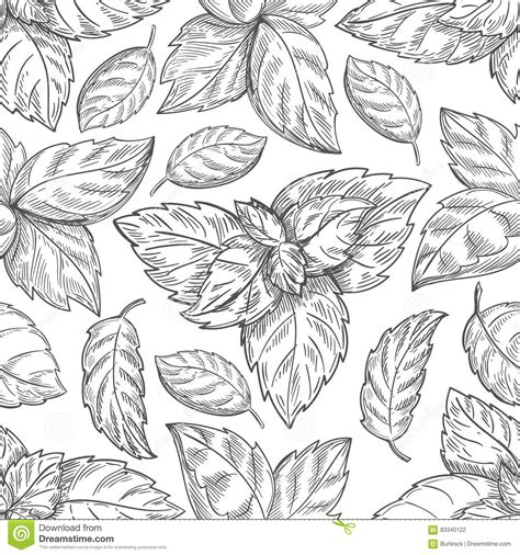 mint leaf coloring page mobile mint herb coloring pages
