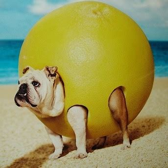 is lemon bad for dogs ld vs hr bo1 30 01 16 12 00 cet csgobetting
