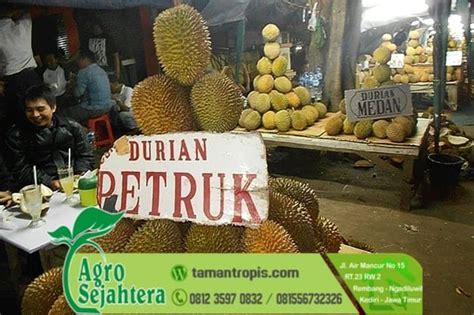 Bibit Durian Petruk jual bibit durian unggul jenis musang king monthong bawor