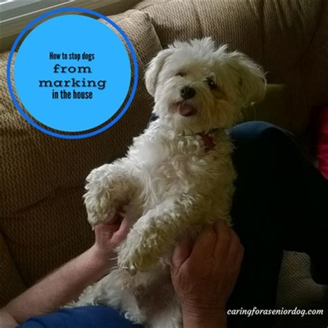 how to stop a from in the house how to stop dogs from marking in the house caring for a senior