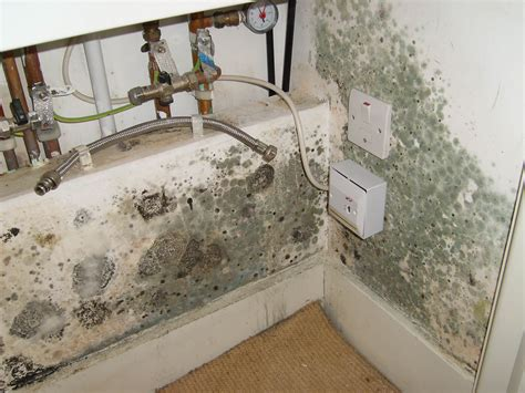 mold remediation may not be necessary in your home here s