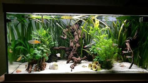Aquarium 100 L by 100l Amazonas Aquarium 1jahr Alt