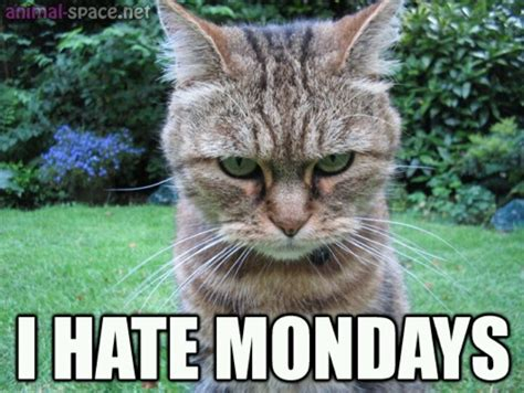 Monday Cat Meme - ugh monday quotes quotesgram
