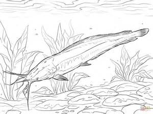 electric catfish drawing www imgkid com the image kid