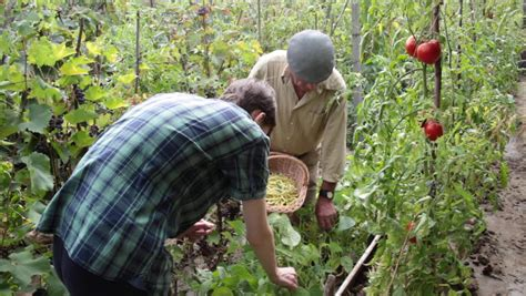 Gardening Help Why Gardening Can Help You Live Longer And Be Healthier