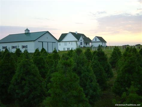 top rated christmas tree farm in kansas city where to get a real tree in the st louis area