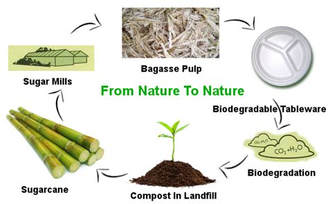 How To Make Paper From Sugarcane Waste - green gate bio packaging materials used