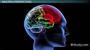 biological psychology essay questions