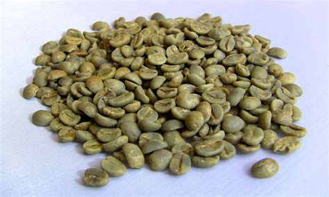 Coffe Green green coffee bean importers copan trade