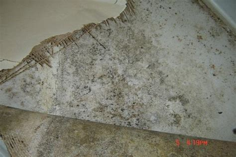 how to get mould off bathroom walls how to repair how to clean mold off walls mold on wall wall mold mildew off