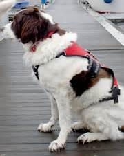 zwemvest voor teckel honden en water doggo nl
