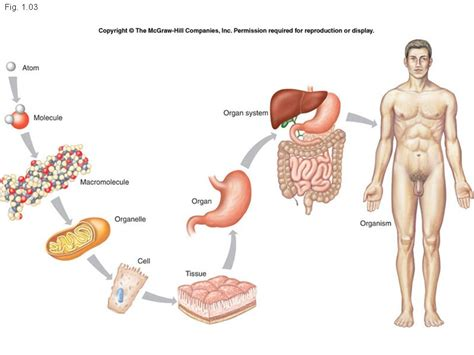 5 proteins found in the human health anatomy