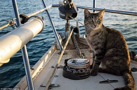 living on a boat jobs couple quit their jobs to sail the world with their cat