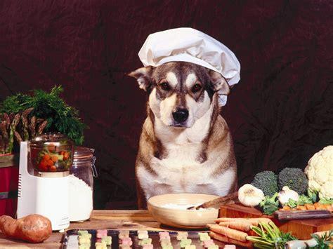 alimenti naturali per cani arriva dog s bistrot alimenti naturali e bio per cani