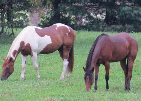 dillard house stables dillard house
