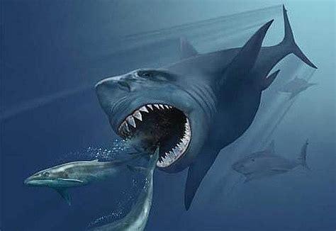 imagenes reales de un megalodon niegan que el megalod 243 n el tibur 243 n m 225 s grande de todos