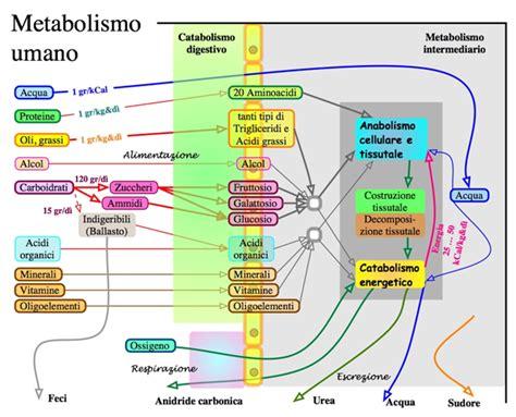 glucosamina negli alimenti the secret of raymond bard ॐ dimagrire veramente di