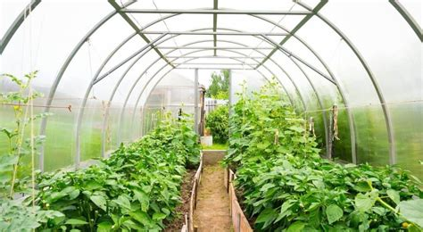 how to build a green home how to build your own greenhouse