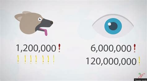 how do dogs see the world 187