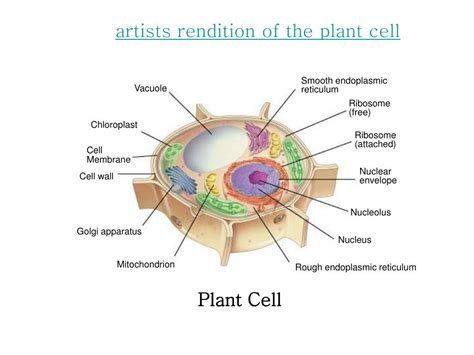 section 7 3 cell boundaries answers ppt chapter 7 cell structure and function powerpoint