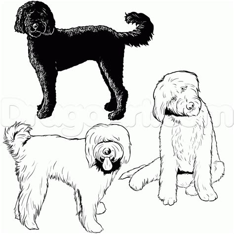how to draw a doodle page how to draw a labradoodle step by step pets animals
