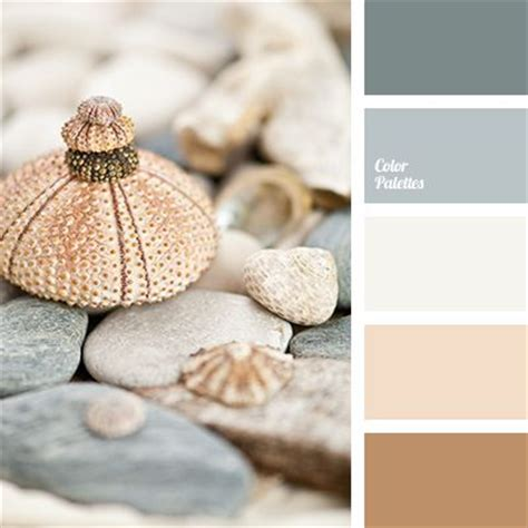 seashell color quot quot color almost white beige color of seashell