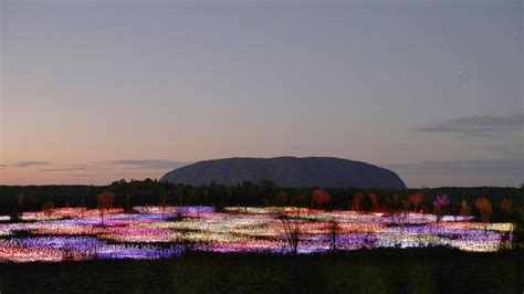 Field Of Light by Uluru Field Of Light By Bruce Munro Escape