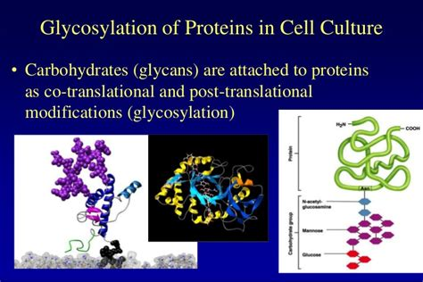 glycosylation pattern analysis lecture 7 glycosylation in cell culture